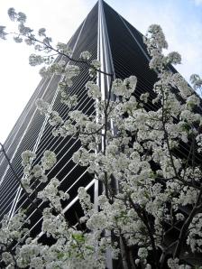 Grattacieli fioriti
