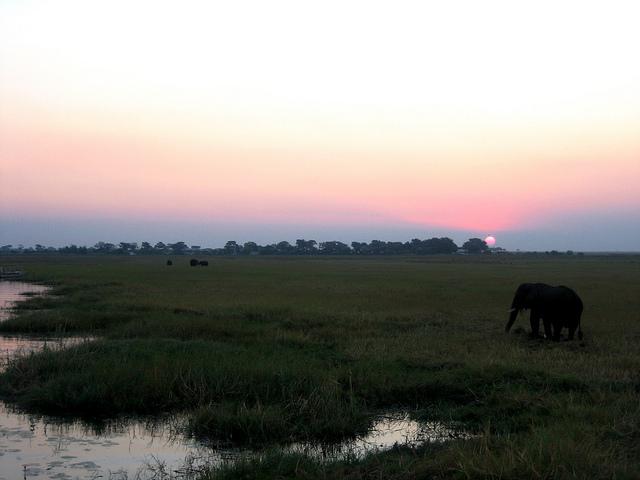 Viaggio in Botstwana #6 – Sulle rive del Chobe