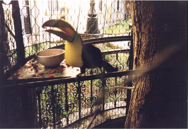 Un tucano a Merida [Foto di RedBavon]
